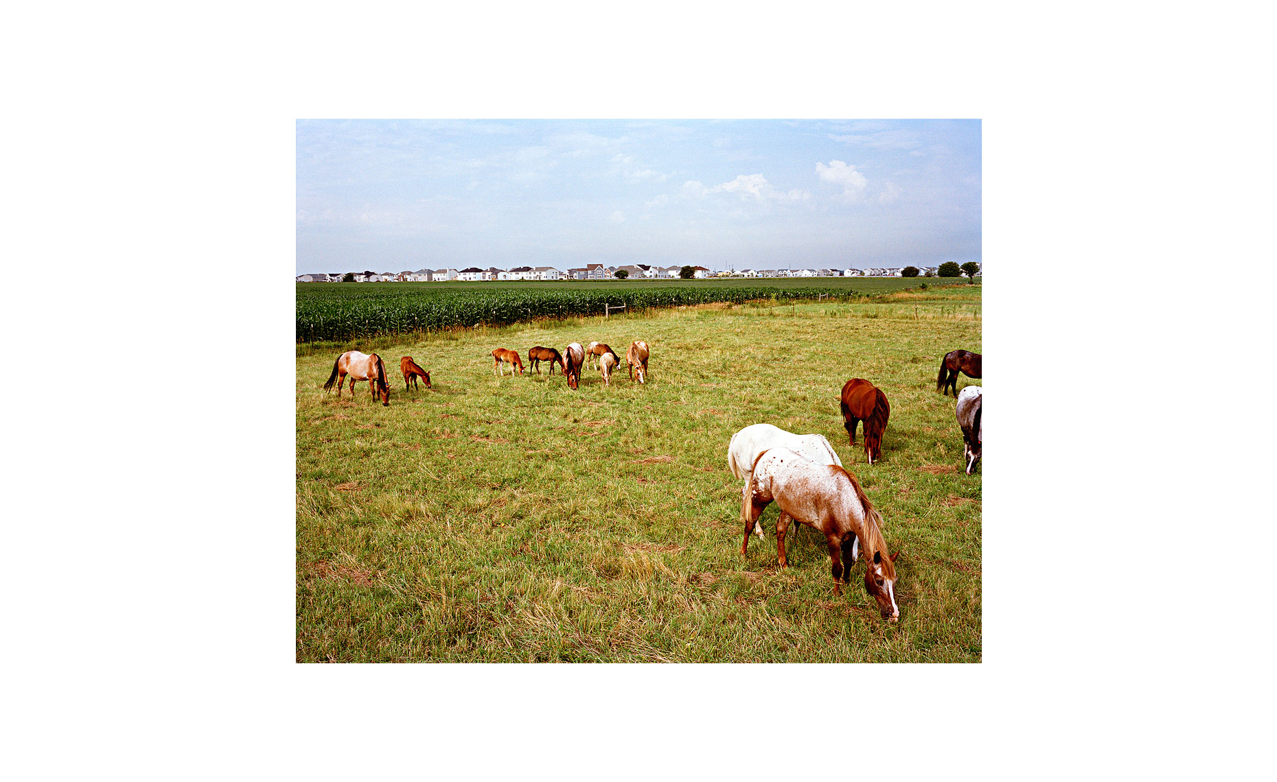 This Was What There Was | Pasture. Plainfield, Illinois. July 2004